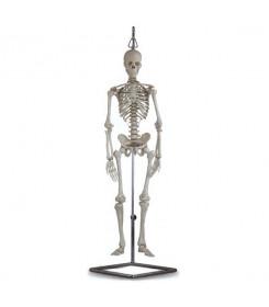 scheletro-anatomico-mini