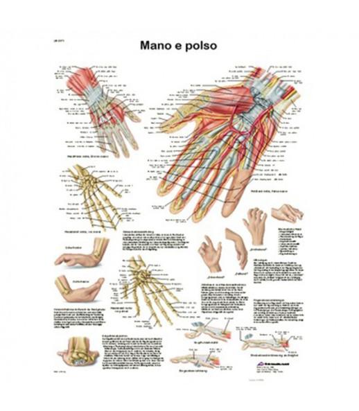 Poster anatomico polso e mano